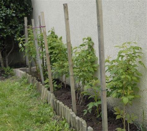 planter des framboisiers en pot ou planter les framboisiers