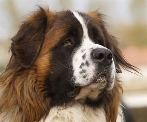 Neurologie Epilepsie bij de hond - neurologie - dermatologie