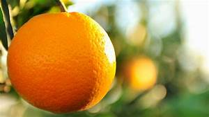 Was Hilft Gegen Kellerasseln : was hilft gegen orangenhaut orangen und co sanlucar ~ Lizthompson.info Haus und Dekorationen