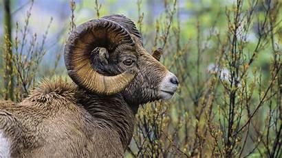 Wildlife African Wild Animals Desktop Wallpapers Animal