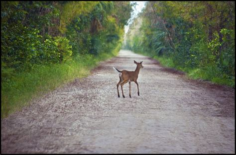 Wildlife Photographer Resume by Sam S Current Resume 2 Resume Jonathan Tabac Ii 04 19