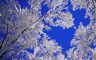 Winter Tree Desktop Wallpapers Wallpup Nature