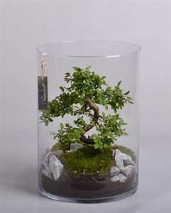 Bonsai Im Glas : producten fusioncolors ~ Eleganceandgraceweddings.com Haus und Dekorationen