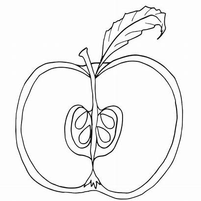 Apple Coloring Clipart Pages Parts Fruit Tree