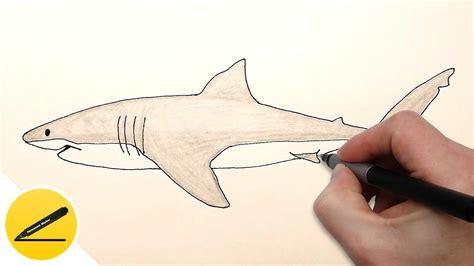 draw  shark step  step easy  beginners