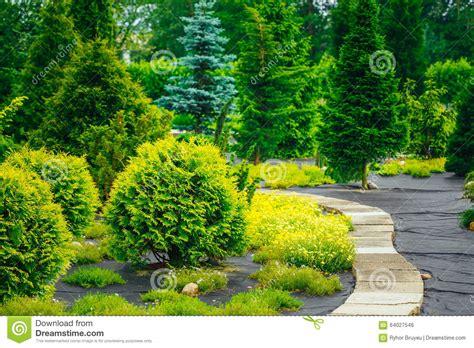 Garden Decorative Bushes by Pathway In Garden Park Decorative Bushes In Stock