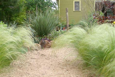 ornamental grass landscape ornamental grass landscaping decorative grass plants houselogic