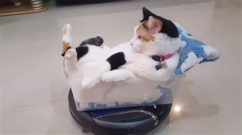 Funny Roomba Cat Rides Roomba Hoover Like A Boss Youtube