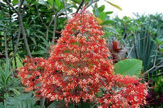 khasiat manfaat bunga pagoda bunga pagoda