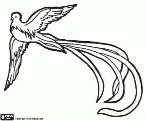 quetzal considerado ave divina  colorear pintar  imprimir