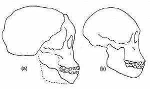 Talk: Homo (disambiguation) - Wikipedia