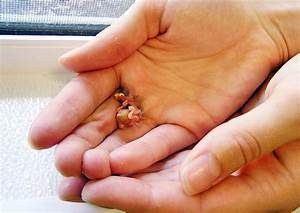 Pictures of The Smallest Baby in The World on Animal ...