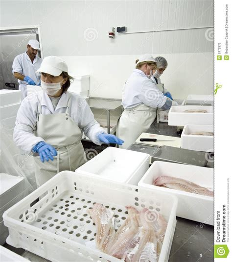 fish processing factory royalty  stock image image