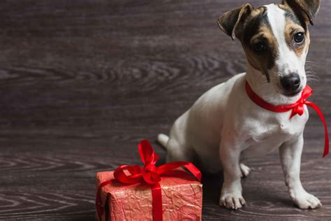 dog names meaning gift  god popular male  female