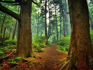forest, trees, trees, nature, background, 09855, , , wallpapers13, com