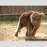 cute-animal-animated-gif