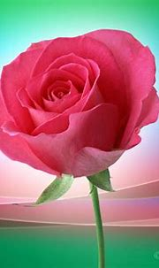 Lovely Artline Pink Rose Wallpaper ~ Artline : Feel The ...