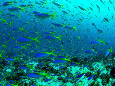Diving in Raja Ampat - Raja Ampat Biodiversity Eco Resort