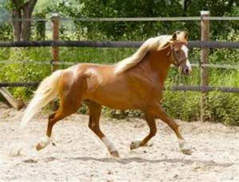 pferde ponys und kleinpferde tieranzeigen seite