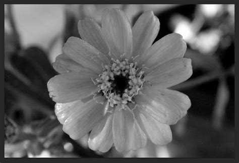 black and white make what color photoshop trick black and white with pops of color