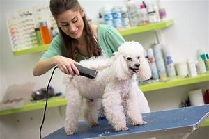 benefits of hiring a professional dog groomer near you by With dog care near me