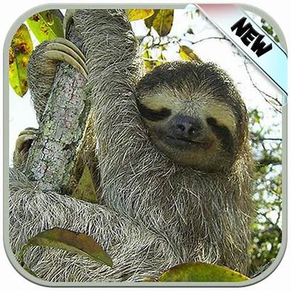Sloth Funny Backgrounds Wallpapers Sign