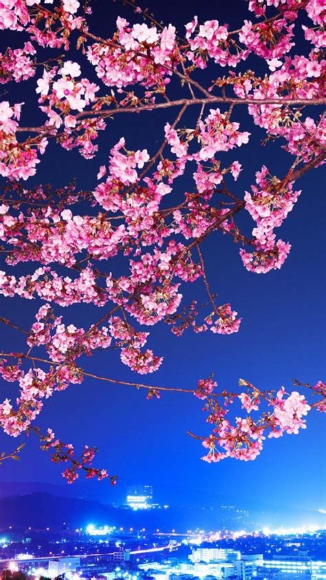 japanese cherry blossom iphone wallpapers top