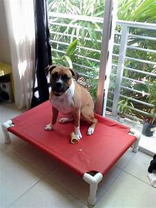 best dog cots ideas on pinterest diy cot beds pvc dog bed With cheap dog cots