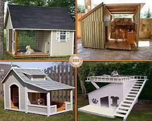 Artistic Land : Cool Dog Houses