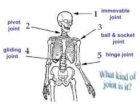 7th Grade Ch. 1 Sec. 2 Skeletal System
