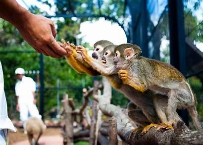 Zoo Exotic Gardens Botanical Southeast Petting Okinawa