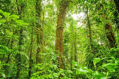 forest background costa rica jungle natural nature wild landscape tropical years rain dense last exotic america trees windows change bay