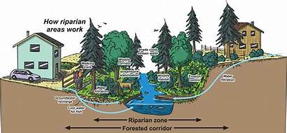 Riparian Areas Water Watershed Budget