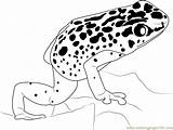 Frog Poison Dart Coloring Clipart Colouring Clip Popular Printable Library sketch template