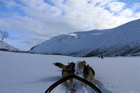 sledding with huskies in tromso