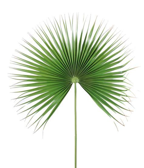 feuille de palmier deco feuille de palmier artificielle d 233 coration et accessoires pas cher pour organiser une soir 233 e 224