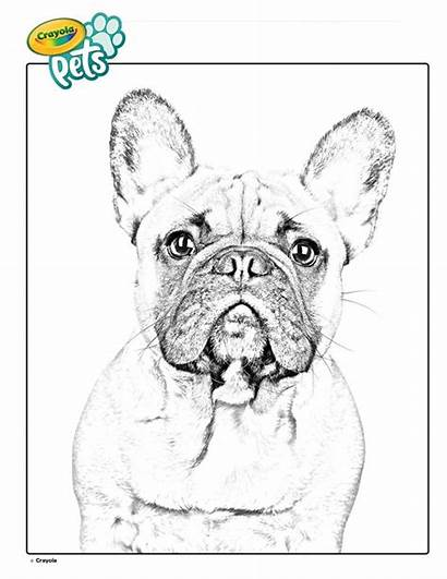 Bulldog Coloring French Dog Crayola Pet Colouring