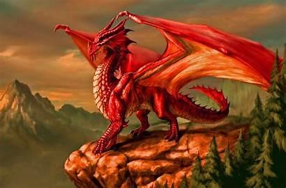 Dragons Dungeons Metallic Draconomicon
