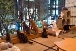cat cafe pay purr pet at japan s cat caf 233 s travel smithsonian