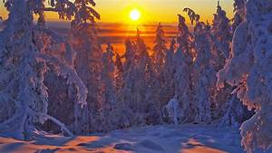 Snowy Pine Forest In The Sunrise - Yakutsk, Russia HD