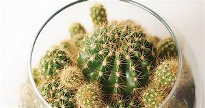 Comment Entretenir Un Cactus : entretien mini cactus 1 mini cactus succulentes cactus en ~ Nature-et-papiers.com Idées de Décoration