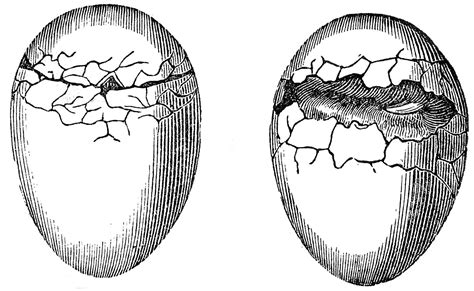 antique natural history graphics cracked eggs