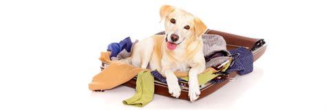 pet friendly hotel downtown calgary dog friendly