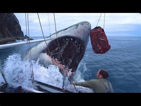 prehistoric megalodon shark caught  camera  real