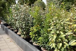 Arbuste Persistant Haie : haie de 15 arbustes persistants fermeture visuelle toute ~ Premium-room.com Idées de Décoration