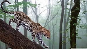 Forest: jungle animals