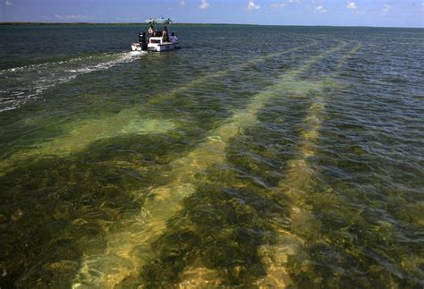 Everglades Propeller Boats by Everglades National Park Plans To Restrict Boating In