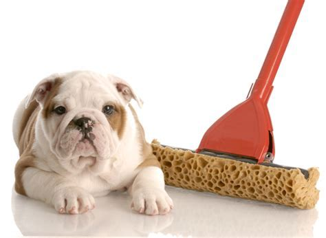 How to Clean Up Pet Messes from Bamboo Flooring