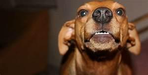 Co znamena ked pes olizuje