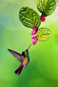 Kleine Fliegen In Blumen : the colors of the hummingbird tattoos pinterest ~ Lizthompson.info Haus und Dekorationen